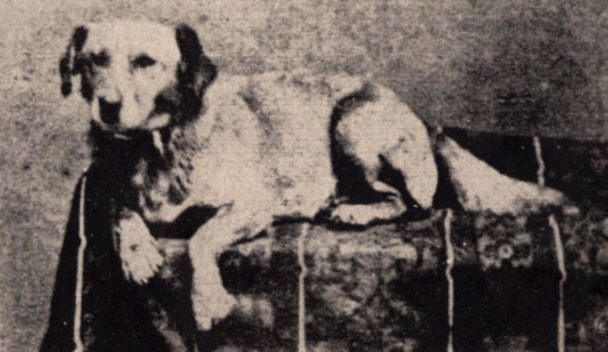 Abraham Lincoln's dog Fido: https://t.co/Be4AUPfC0a