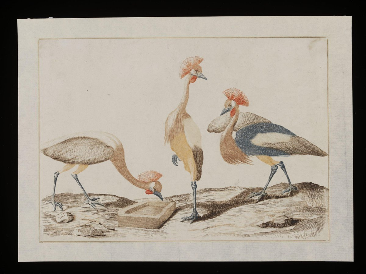 From the V&A collection: E.3977-1915 Colour engraving  V&A On display Prints & Drawings Study Room, level E https://t.co/97zUy5ftqB #art #design #museums https://t.co/sGdJf9GoQy