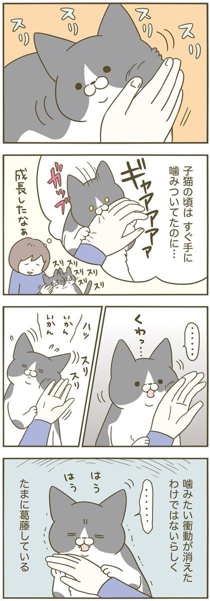 ときどき噛みたくなるけれど、それをぐっと我慢・・・!そんな猫の葛藤を描いた漫画が話題に!
