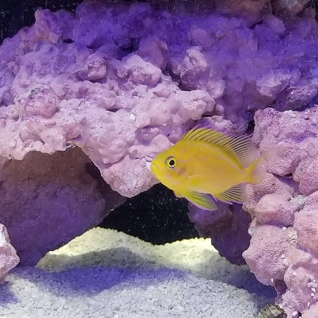 CoralReefShop photo