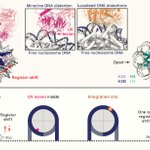 Image for the Tweet beginning: Reading the chromatinized genome [leading