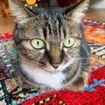CANA30207831のサムネイル画像