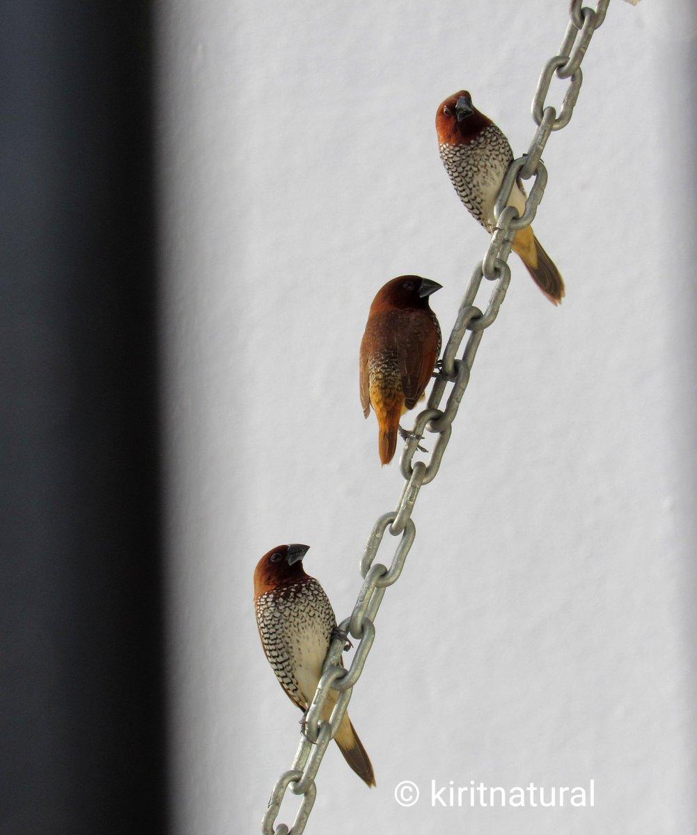 #birdphotography https://t.co/ckeSmrnais