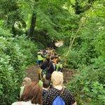 Image for the Tweet beginning: Enjoying a woodland walk, listening