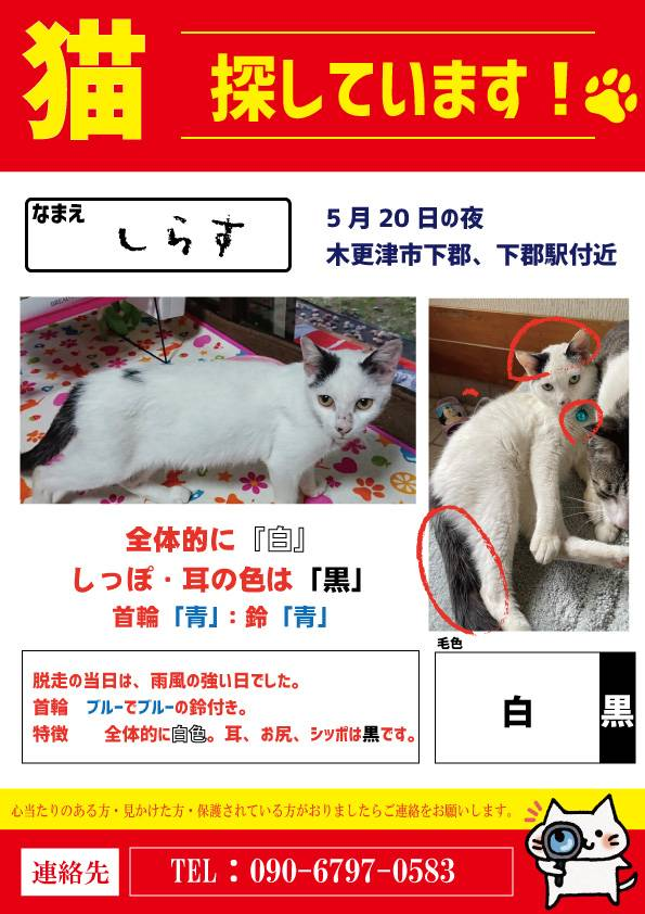 迷子猫情報、ご協力をお願いいたします。 木更津市下郡付近で白黒の猫ちゃんが行方不明となっています。 見かけた方がいらっしゃいましたらチラシ連絡先へご一報下さい。 多少動いてしまっている可能性もあります。周辺の馬来田、小櫃の住民の皆様へも情報が伝わりますようにご協力お願い致します。 https://t.co/Lyd5DoXo9X