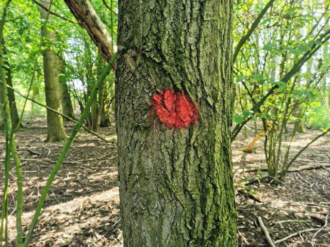 Start boswerkzaamheden aan de Zuidbuurt in juli https://t.co/5SqsKORlxi https://t.co/weWOq4L6sM