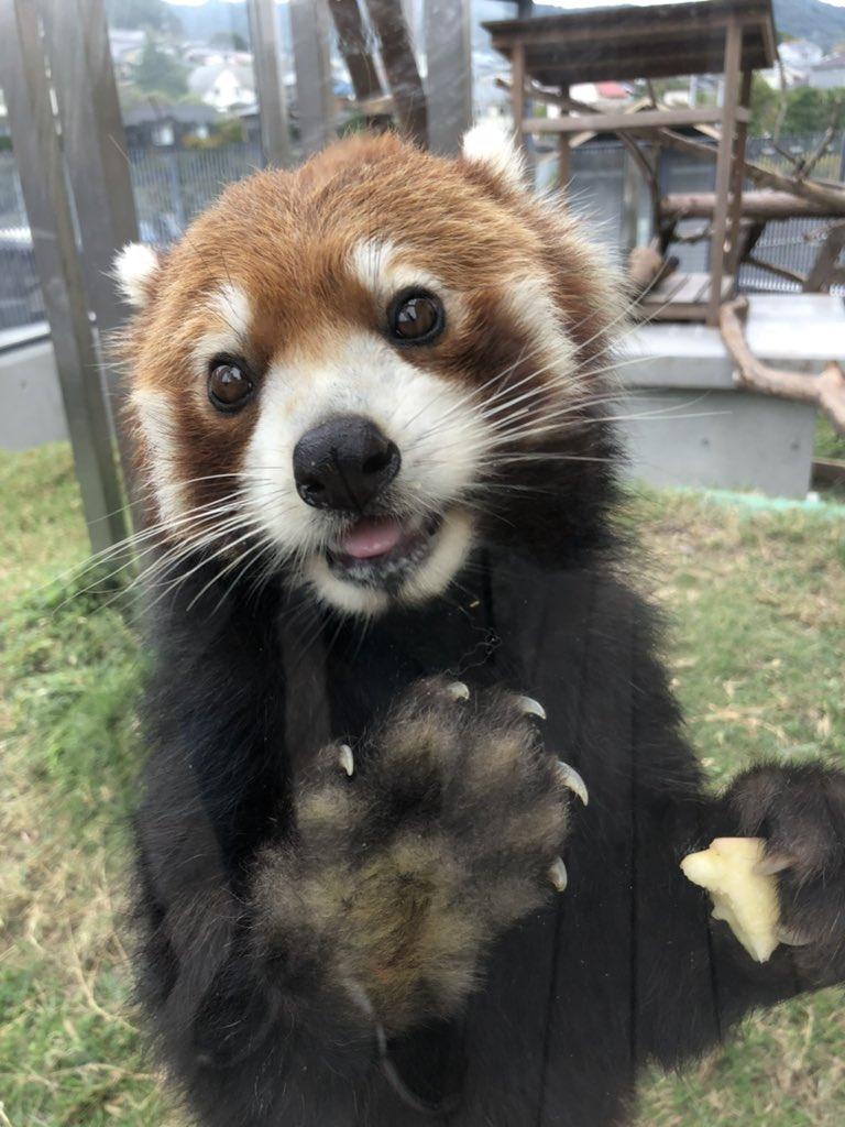 bitcoin panda indonezija)