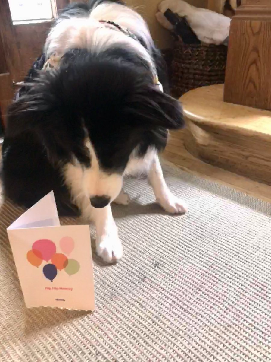 <a target='_blank' href='http://twitter.com/Chewy'>@Chewy</a> THANK YOU  for the surprise birthday card for my pup, Birdie!  We both enjoyed it! <a target='_blank' href='https://t.co/GRBP82uimm'>https://t.co/GRBP82uimm</a>