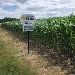 Image for the Tweet beginning: First #BurrusSeed field sign of