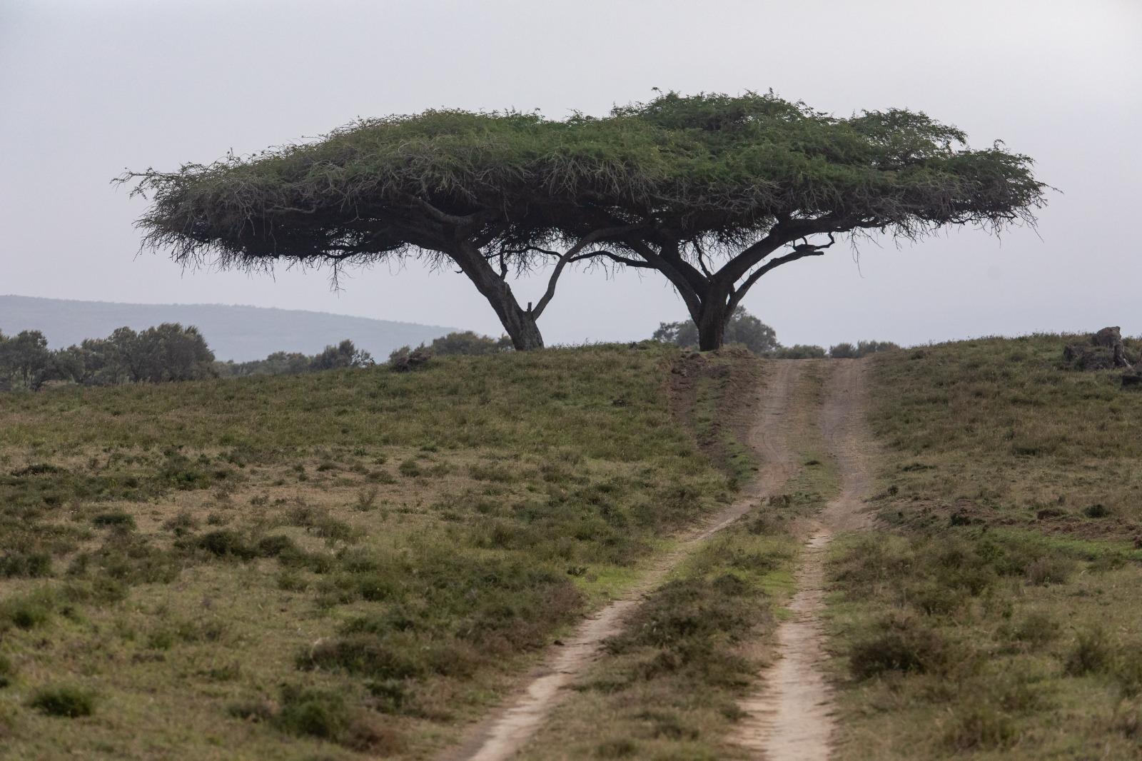 WRC: Safari Rally Kenya [23-27 Junio] - Página 2 E4gmqDSXoAIkaln?format=jpg&name=large