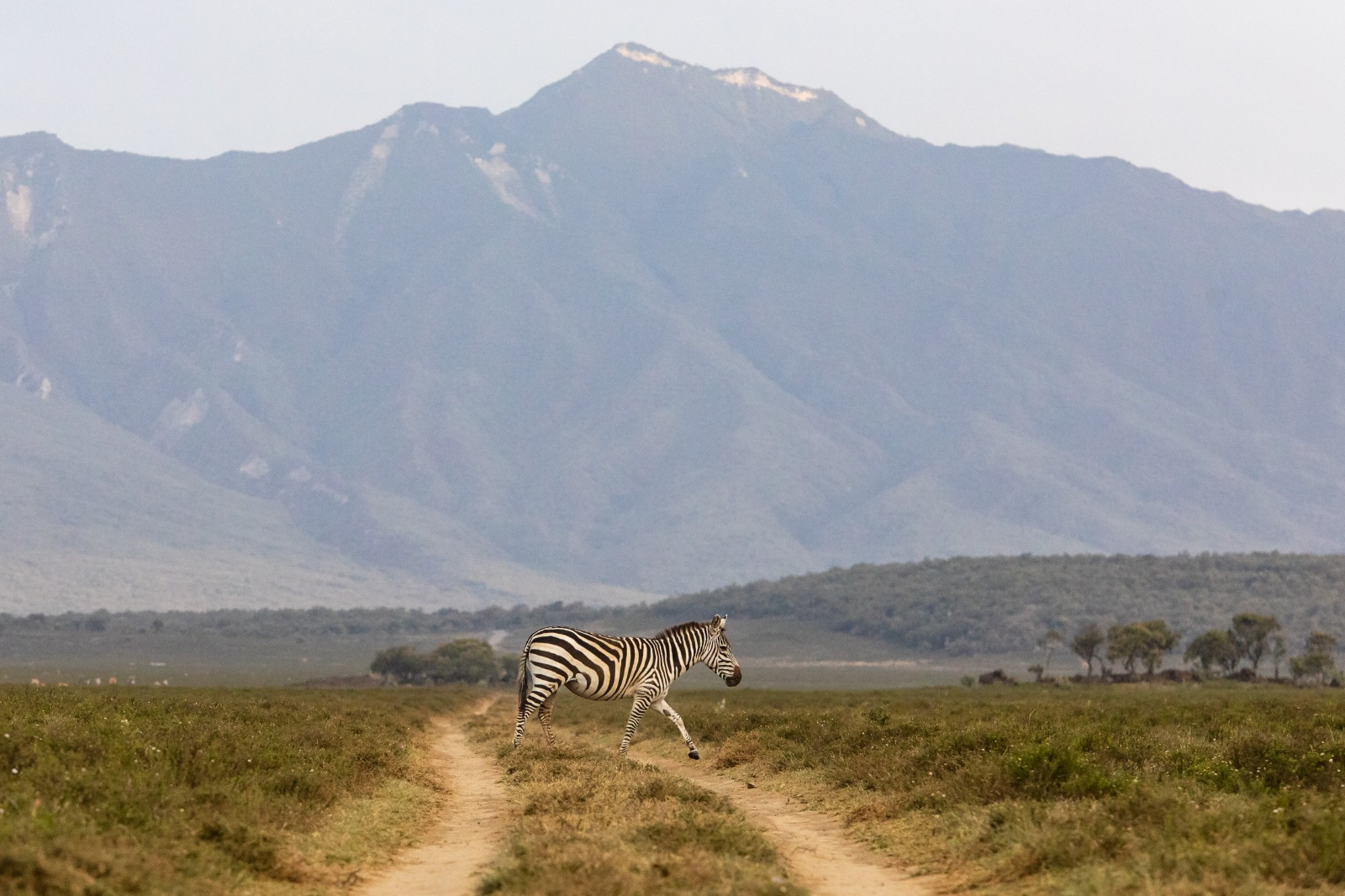 WRC: Safari Rally Kenya [23-27 Junio] - Página 2 E4gmtt3XEAAiF0_?format=jpg&name=large