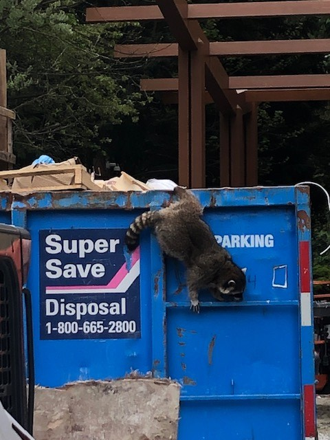 test Twitter Media - We had a visit from Ninja Racoon at our Kiwanis North Shore Housing Society project in North Vancouver. Stealthy little guy! https://t.co/uaSy3HaOG4