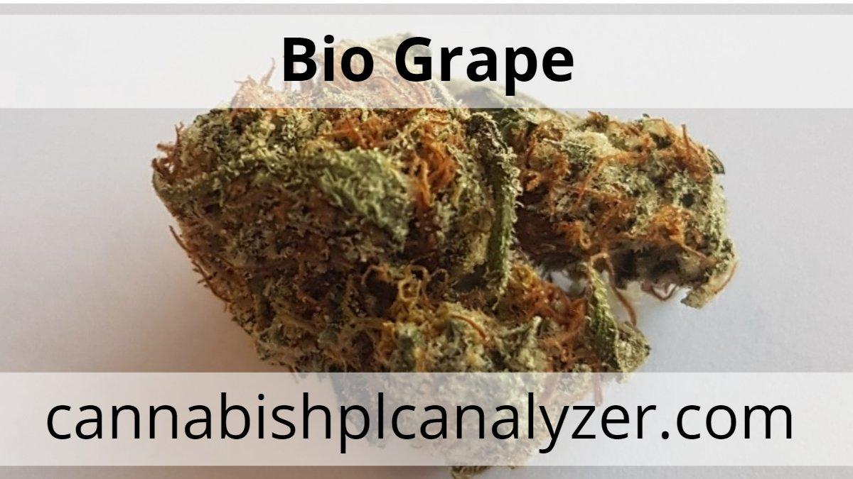 cannabistest1: Bio Grape Strain Highest Measured Values Total THC 22.76% Total CBD 0.04% Total CBG 0.50%  #Mmemberville  #hplc #AffiliateMarketing #affiliateprogram #hemp #USA #cannabisnews #cannabisindustry #cannabinoids #hplc