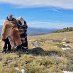 Visits to the Alpine region are key to Jaithmathang Senior Elders Goengalla Jumma Myermyal Minjeke and Goengalla Goro Konermar Wotter rekindling spiritual belonging to their Ancient Sacred Yero Mountains and High Plains Country. #NLP #landcare https://t.co/mSWYC8WSLG