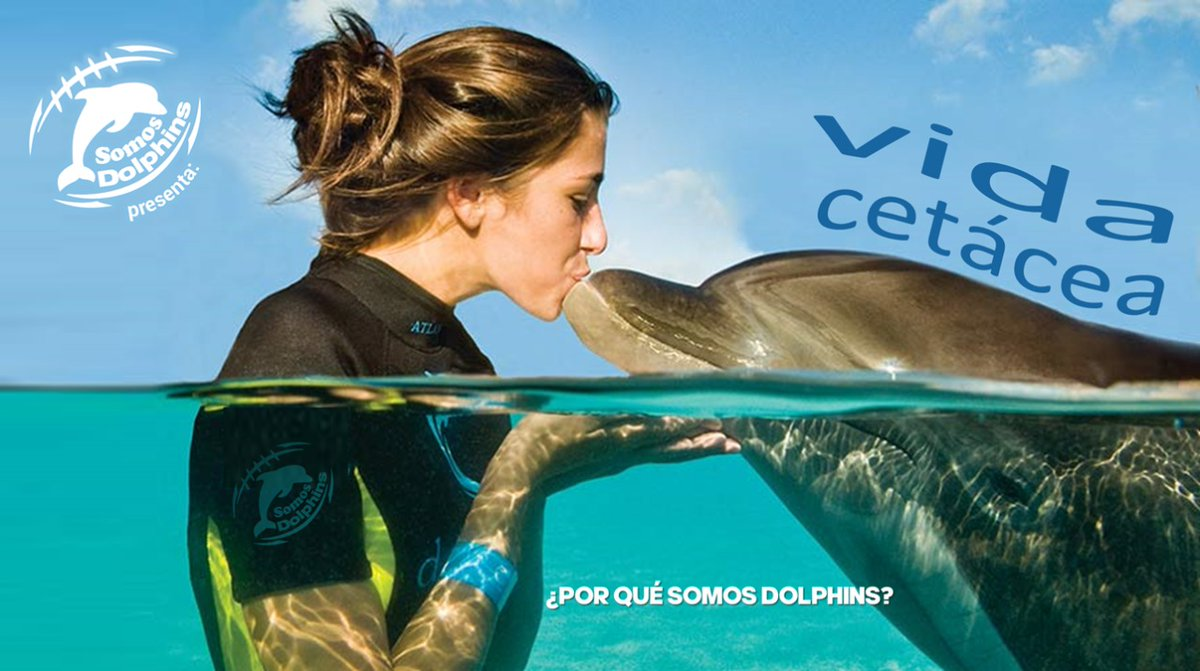 ¿Por qué Somos Dolphins? - https://t.co/Xx4u4V1Wsb https://t.co/abk0Ah4vY0