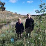 The Rowlands have been working with us to remove willows and revegetate their stretch of Birch's Creek frontage near Smeaton since 2019.  And the difference is astounding. Check it all out here https://t.co/fFLoY3pnrk #BirchsCreek
