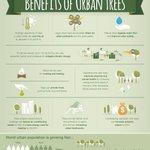 Image for the Tweet beginning: 💭🌳#DYK that large urban trees
