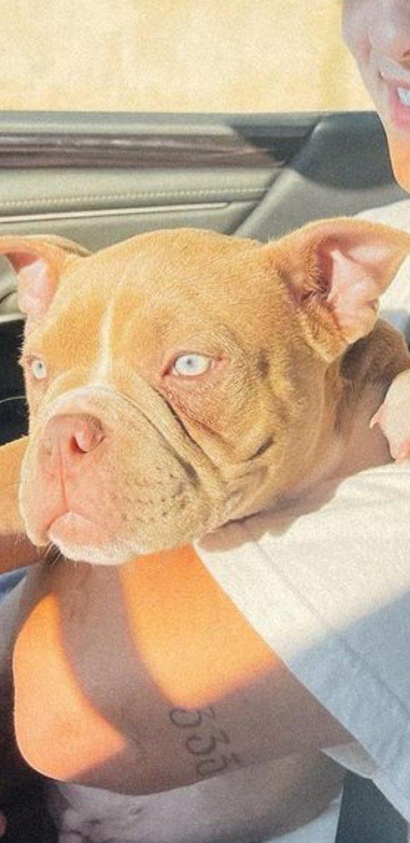 Nada me tira da cabeça que esse cachorro é a cara do Fábio Assunção e nem é pelo olho não, a cara TODA https://t.co/FVx1Mh3Fhu