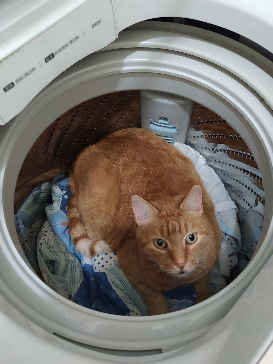 猫がいなくなった!?しかし洗濯機を開けた瞬間飛び込んできた光景に驚き!