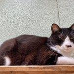 Image for the Tweet beginning: 【 おはようございます! 】  📷:2021/06/18 〖 ミカニくん 〗  見てるだけでこの安心感! たまりませんね😁💕  #保護猫