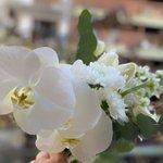 Image for the Tweet beginning: 👰🏻El Ramo de Daniela👰🏻… Orquídea