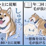 飼う前と後とで変わった認識!柴犬に関する投稿が話題に!