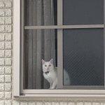 猫の「杏仁」ちゃん、行方不明。ご協力をお願いいたします!