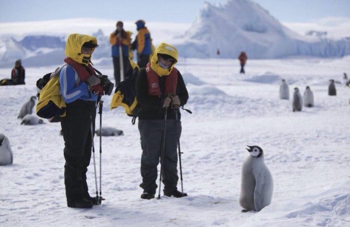 この警戒心のなさが人間にとってはたまらない!ペンギンにとっての人間の存在とは