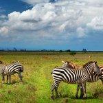 Image for the Tweet beginning: Kenya's first national park -