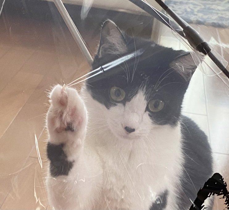 家の中で新しい傘を広げてはいけない!?猫にやられてしまうかも!