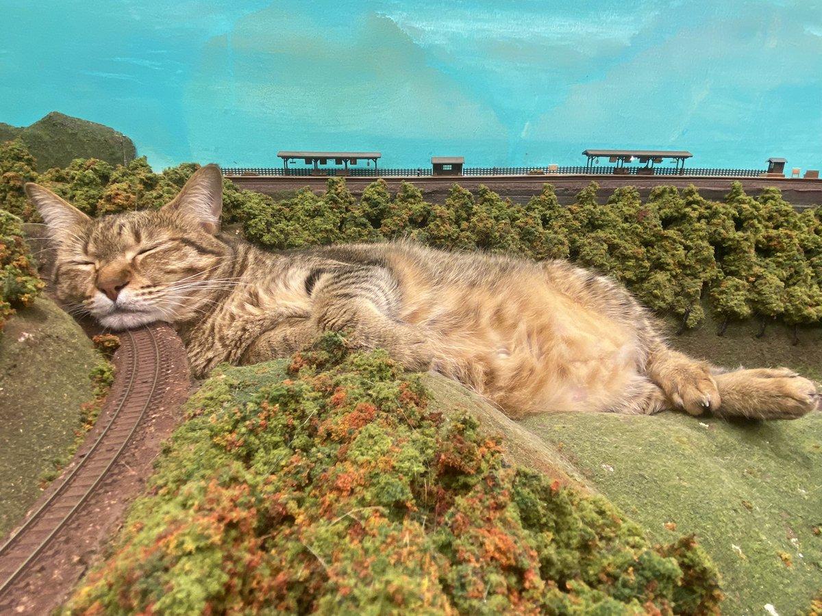ジオラマに猫!疲れた心が癒される