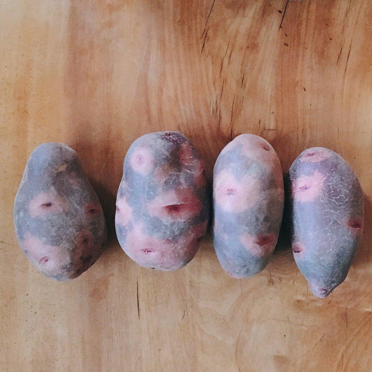 その名も「デストロイヤー」!三方原産のジャガイモの名前だよ!元ネタ分かる人はいますか??