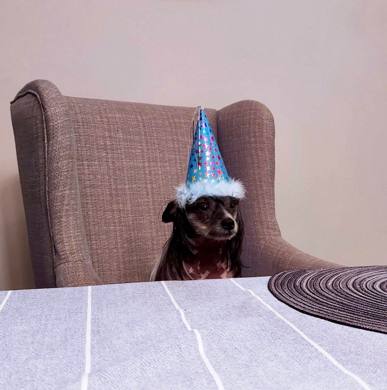 Happy Birthday to my nephew, the Prince of Darkness, Ozzy  He just wants cake and nothing else.