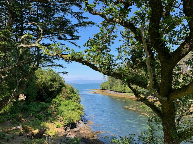 Garden of the Week is @derreen2 .  A mature 60-acre woodland garden, it contains sub-tropical plants from around the world, as well as stunning views.  Open daily 10 to 6.  V93 D792. @Corkcoco  @pure_cork   #purecorkwelcomes #westcorkgardentrail #gardenoftheweek @Kenmare_dot_ie https://t.co/2bYB2c2ySF