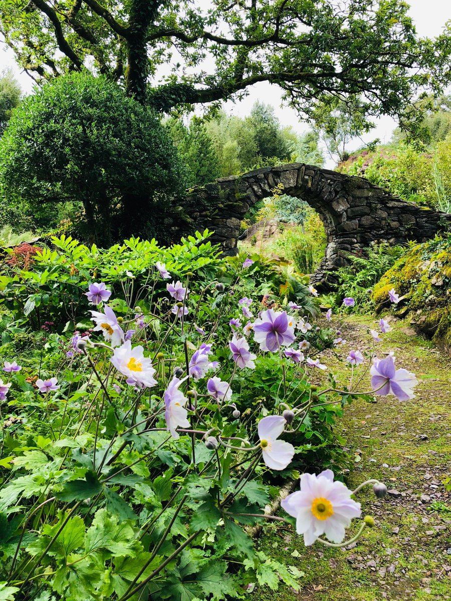 We have 2 gardens on the north of the Beara Peninsula.  @derreen2 has over 60 acres of rare and exotic plants, whilst Dawros Gallery & Garden, is set by the Dromoughty River waterfall. @Corkcoco  @pure_cork  #purecorkwelcomes #westcorkgardentrail #lovegardens @Kenmare_dot_ie https://t.co/zaEeCBiFMS