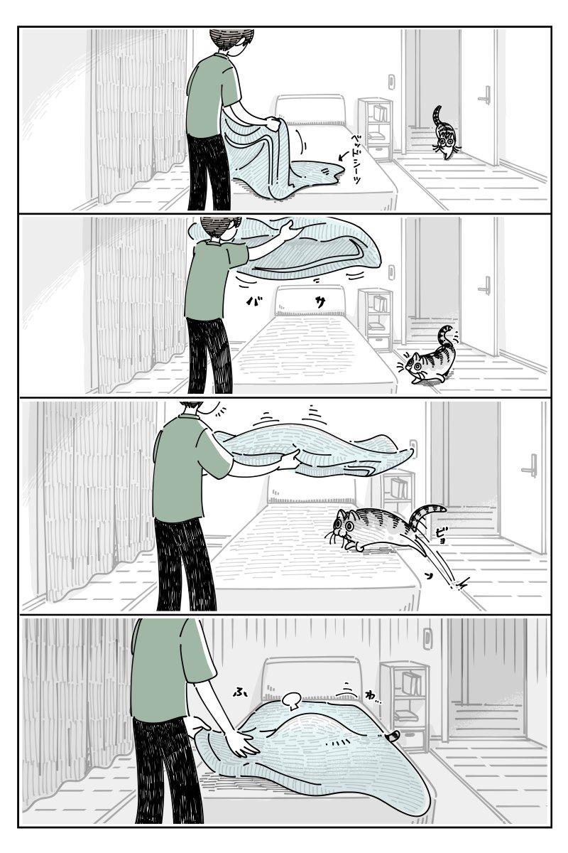可愛すぎる!ベッドシーツを敷くときの、飼い猫とのやり取りを描いた猫漫画が話題に!
