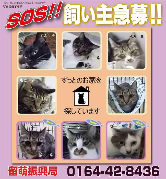 パトロール 函館 ワンニャン ワンニャンパトロール、猫40匹のもらい手急募 現飼い主が飼育不能に
