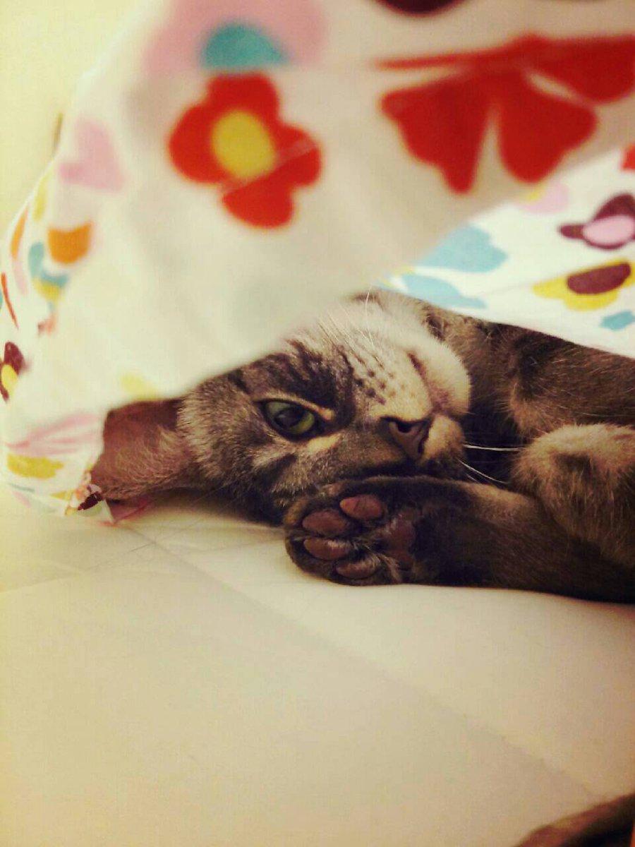 飼い主が餌を忘れたら…ロシアの猫はいじけてしまう!