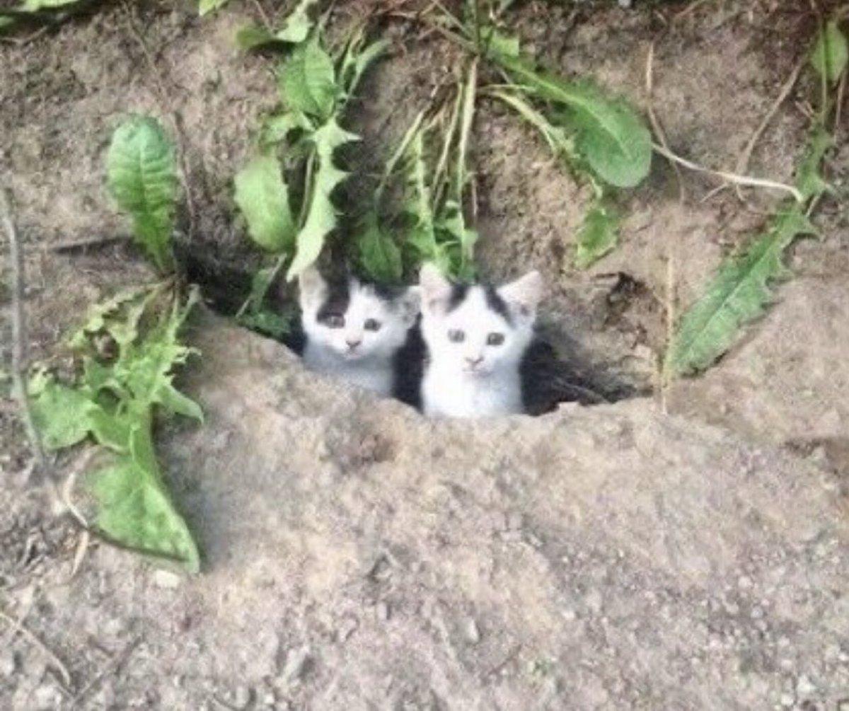 「ここならご飯が食べられるよ!」家族に分け与える猫