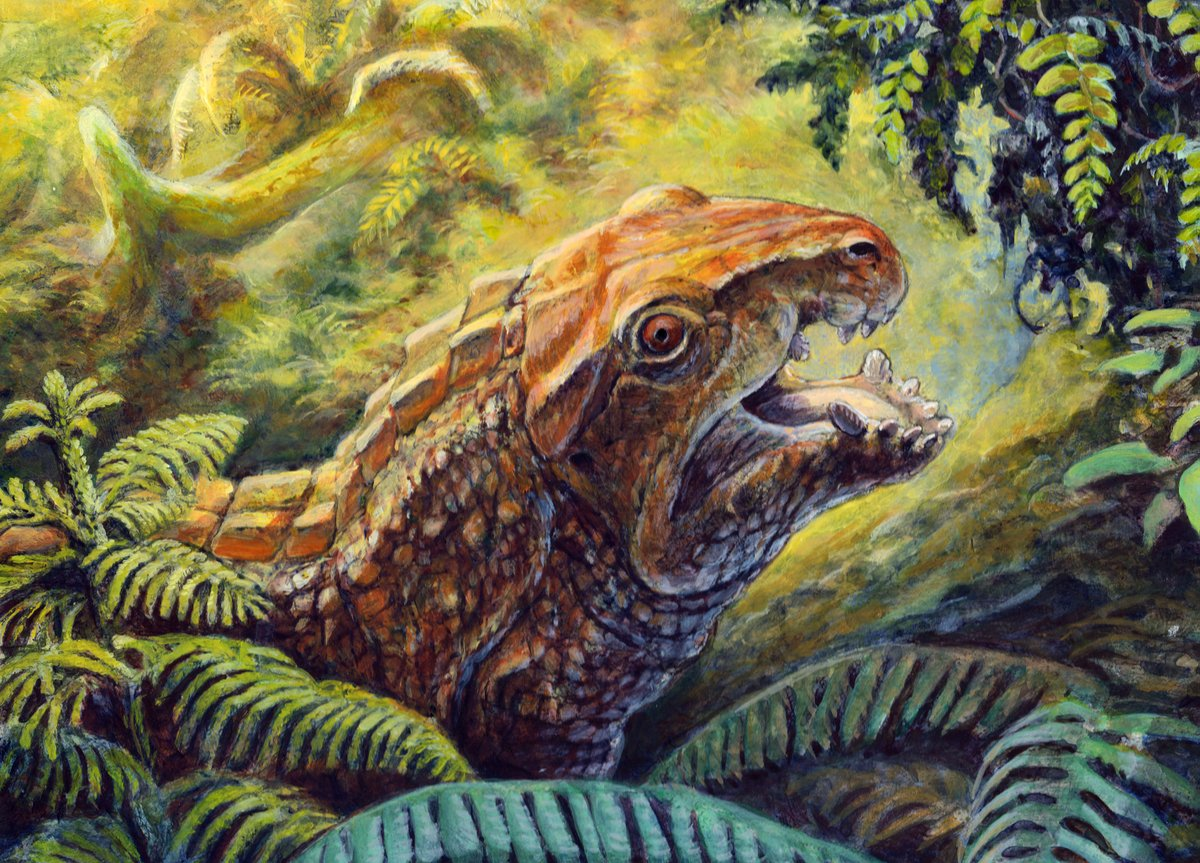 A painting of Syntomiprosopus, a newly named short-faced archosauriform from the Late Triassic of Arizona. This reconstruction was commissioned by @app_earth_sci professor Andy Heckert, who led the team describing this strange Triassic beast.
