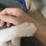 雷は猫だって怖い!手をつかんであげるともう片方も出してきたwかわいい~