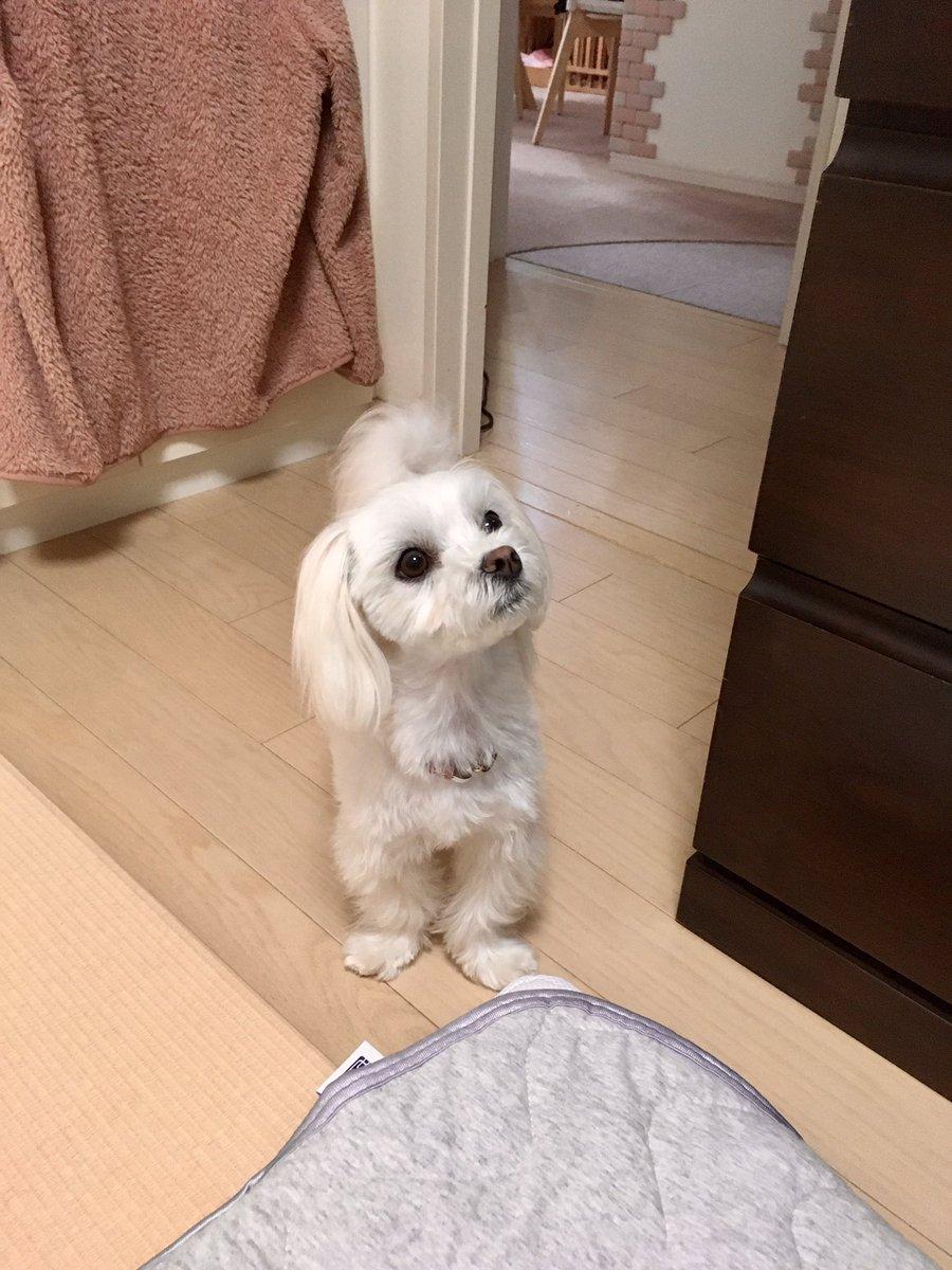 犬と猫がどっちもいる生活は?歳をかさねても毎日たのしい!