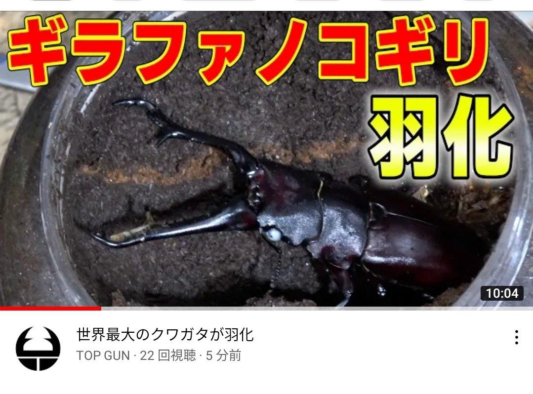 トップ ガン クワガタ