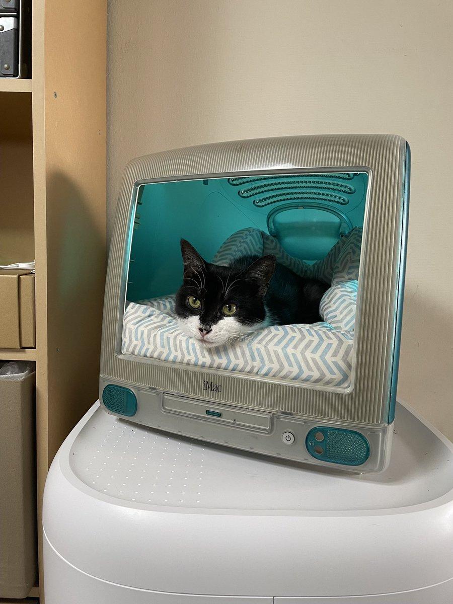 あらま!にゃんとも素晴らしいiMacのリサイクルのあり方w猫ちゃんもお気に入り