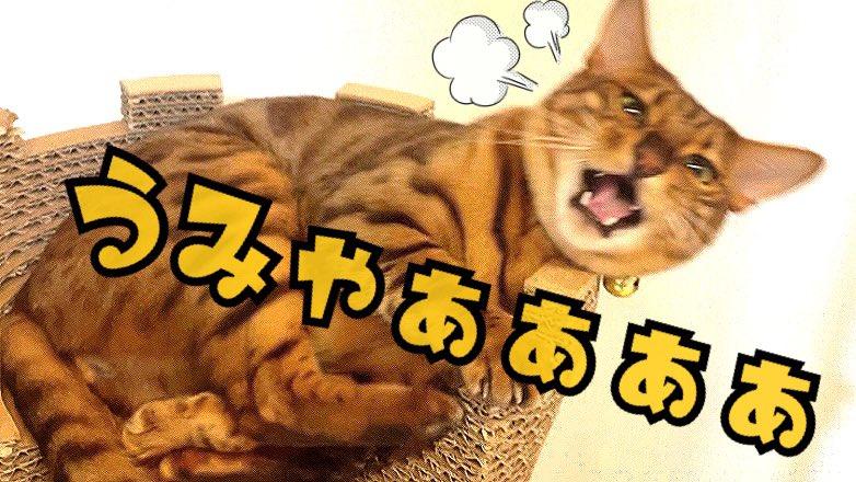 たま ハウス 嫌い にゃん 【まるで人間】 かかあ天下のネコ夫婦に、突然子どもを産んで戻ってきたクロネコ……6匹が送るドタバタライフ「にゃんたまHOUSE」が可愛すぎる