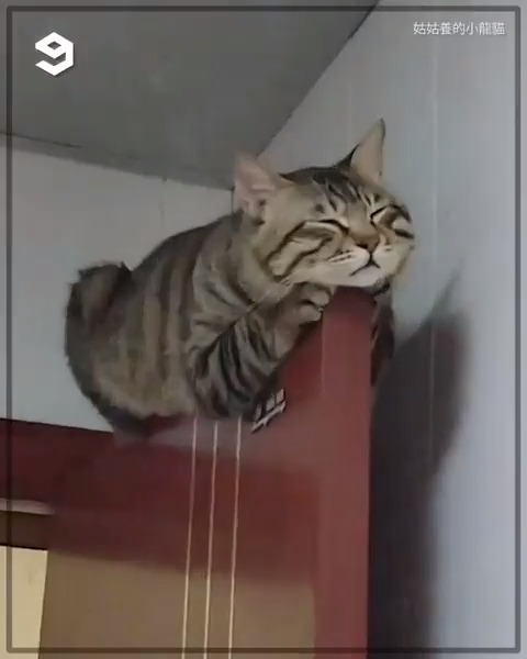 this chonky cat insists to sleep on doors https://t.co/Nk5MP1YDI0