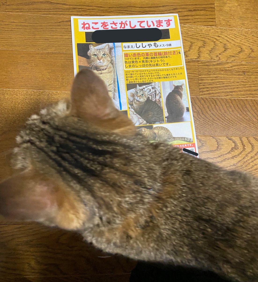 飼い主の心配を知らず、のんびりな猫!捜索ポスターまで書いたのに