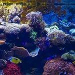 Image for the Tweet beginning: Did you know? It's #CoralReefAwarenessWeek!