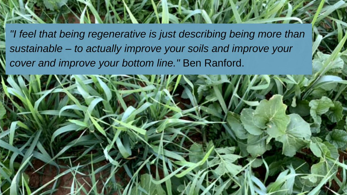 What a great little clip exploring that buzz word 'regenerative' agriculture, and Ben's journey over the last decade. We worth a listen; Ben simplifies and demystifies @DavidEvans_GGL @epag100 @jamescant18 @PJScoff @rudigermaxpower @tolafarms @ymandiesel @aewright91 https://t.co/AggOWXYgVY