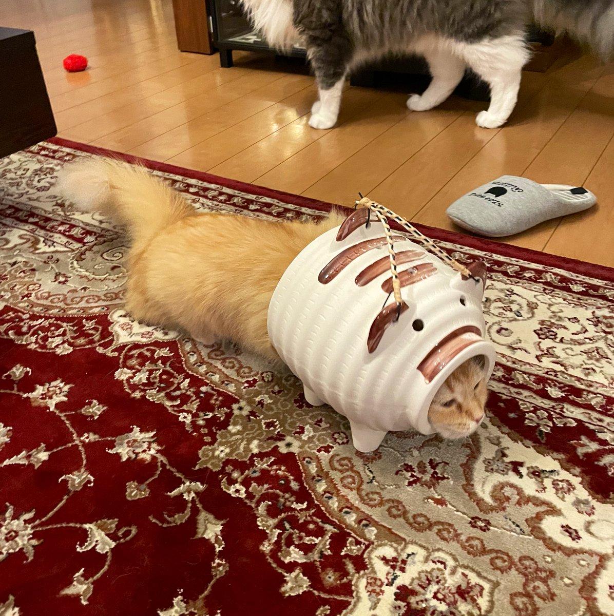 こちらが蚊取りアーマーを装備した猫です(笑)